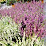 Plante Ptour horticulture