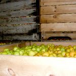 Caisse pommes
