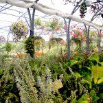 Serre Secrets de jardin